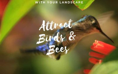 How To Attract Birds And Bees With Your Landscape